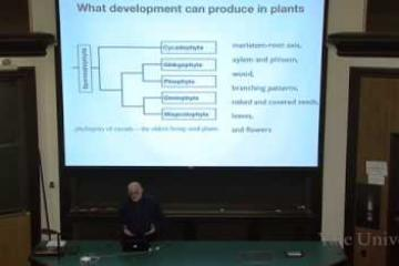 Lecture: The Importance of Development in Evolution