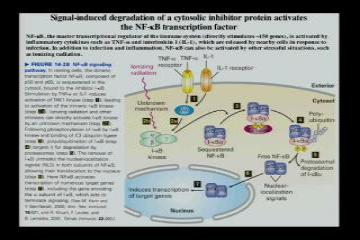 Lecture: RNA Processing: Part II
