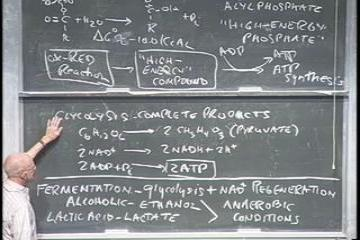 Lecture: Cellular combustion and the production of energy - #1 - anaerobic processes