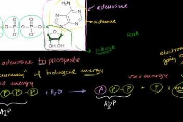Lecture: Adenosine Triphosphate: ATP Introduction