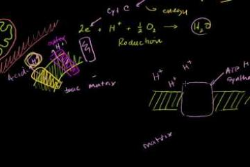 Lecture: Electron Transport Chain