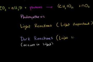 Lecture: Photosynthesis
