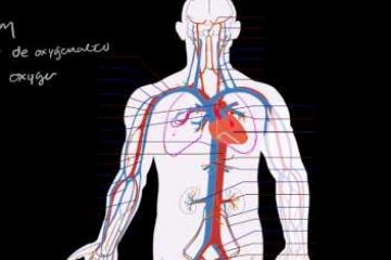 Lecture: Circulatory System and the Heart
