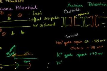 Lecture: Saltatory Conduction in a Neuron