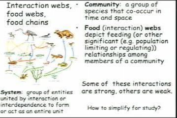 Lecture: Food Webs, Food Chains and Species Interaction Strength